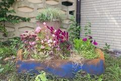 Una caja de madera de la flor con las diversas plantas florecientes en el jardín fotografía de archivo libre de regalías