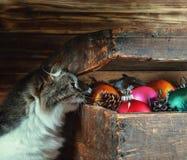 Una caja vieja con decoraciones de la Navidad y un gato Imagen de archivo