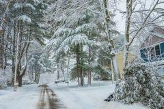Una calle abandonada en una pequeña ciudad americana, cubierta con nieve árboles coníferos grandes hermosos en la nieve Imagen de archivo