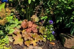 Una cama de flor con las hojas talladas hermosas y la piedra azul de las flores Fotografía de archivo
