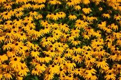 Una cama de flores amarillas imágenes de archivo libres de regalías