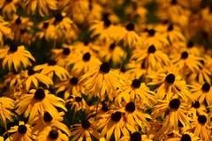 Una cama de flores amarillas foto de archivo libre de regalías