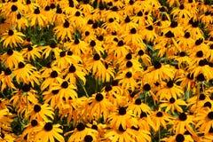 Una cama de flores amarillas imagen de archivo