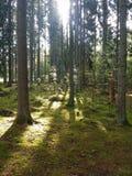 Una caminata en el bosque Fotos de archivo