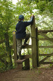 Una caminata en las maderas 1 Fotos de archivo