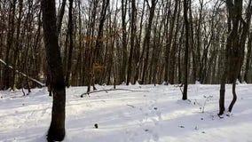 Una caminata en las maderas almacen de video