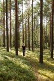 Una caminata en las maderas fotografía de archivo libre de regalías