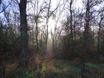 Una caminata en las maderas Fotos de archivo