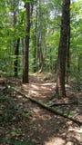 Una caminata en las maderas Imagenes de archivo