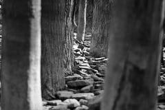 Una caminata en las maderas Imagen de archivo