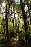 Una caminata en las maderas Fotos de archivo libres de regalías
