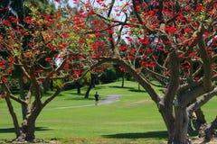 Una caminata en primavera Imagen de archivo libre de regalías