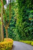 Una camminata nel giardino fotografie stock