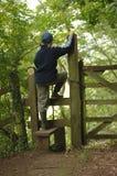 Una camminata nel legno 1 fotografie stock