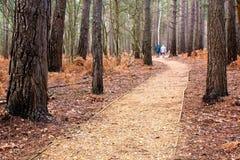 Una camminata nel legno Fotografie Stock Libere da Diritti