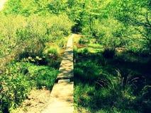 Una camminata nel legno Fotografia Stock