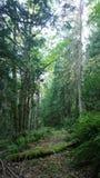 Una camminata nel legno Fotografia Stock Libera da Diritti