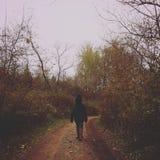 Una camminata nel legno Fotografie Stock