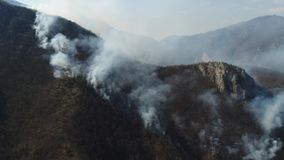 Una cantidad aérea móvil del humo grueso en el bosque que cubre el área entera almacen de metraje de vídeo