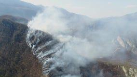 Una cantidad aérea móvil del humo grueso en el bosque que cubre el área entera almacen de video