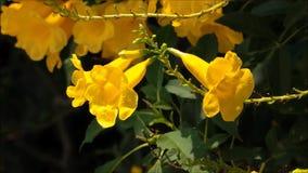 Una cantidad de la abeja que busca un dulzor de la flor amarilla en un jardín botánico metrajes