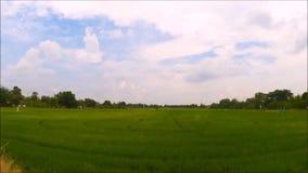 Una cantidad de la vista granangular del campo verde del arroz con el cielo nublado dramático en la zona rural de Tailandia almacen de video