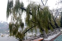 Una capa gruesa de hielo, congelada las ramas formó BingGua, brillando y translúcido líbrese, es muy bueno imagen de archivo libre de regalías