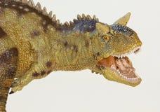Una carne que come el dinosaurio del Carnotaurus, Bull carnívora Foto de archivo