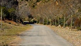 una carretera de asfalto en el medio del campo con dos hileras de árboles sin las hojas en ambos lados del camino sin los vehícul imágenes de archivo libres de regalías