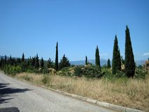 Una carretera de asfalto estrecha en un día soleado caliente más allá de árboles imperecederos y de la hierba sol-chamuscada fotografía de archivo