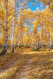 Una carretera nacional en un bosque denso del otoño en un día claro Fotos de archivo