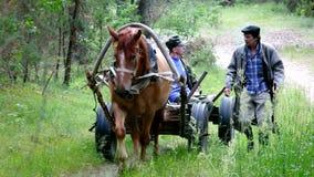 Una carrozza a cavalli con il tassista ed il compagno stock footage