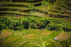 Una casa aislada de la granja en las terrazas del arroz de Batad foto de archivo