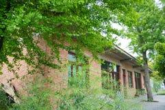 Una casa china del pueblo del ladrillo rojo rodeada por los árboles grandes del ginkgo fotos de archivo
