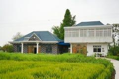 Una casa china del pueblo del ladrillo y un árbol grande del ginkgo imágenes de archivo libres de regalías