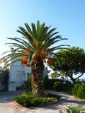 Una casa con una palmera Foto de archivo