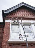 Una casa con una pianta davanti  Fotografie Stock