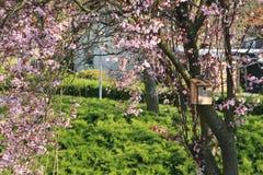 Una casa del pájaro en el tronco del árbol con el flor rosado Foto de archivo libre de regalías