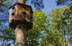 Una casa per gli uccelli su un albero fotografie stock libere da diritti