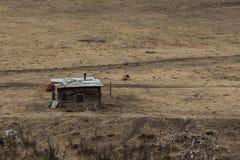 Una casa sola Vicino alla mucca immagini stock