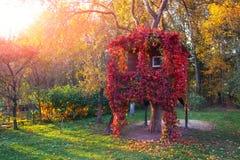 Una casa su un albero Fotografia Stock