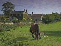 Una casa y un caballo Foto de archivo libre de regalías