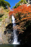 Una cascada con el arce japonés. Imagen de archivo