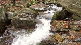 Una cascada en las montañas, bosque del otoño con follaje almacen de metraje de vídeo