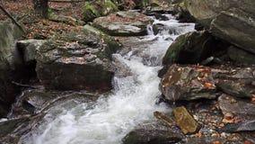 Una cascada en las montañas, bosque del otoño con follaje metrajes
