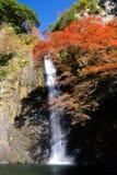 Una cascata con l'acero giapponese. Immagine Stock