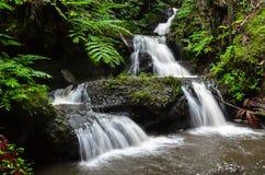Una cascata hawaiana lattea precipitante a cascata immagine stock