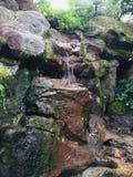 Una cascata in mezzo ad una giungla a distanza fotografia stock