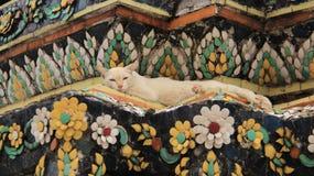 Una Cat Relaxtion On Colored Mosaics Imágenes de archivo libres de regalías