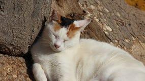 Una Cat Sleeping perdida imagen de archivo